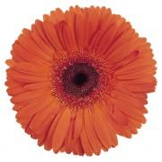 Orange with eye