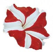 Bicolore rosso bianco