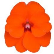 Arancio elettrico