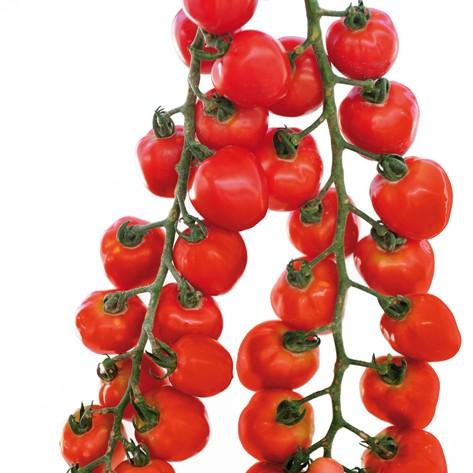 Gardenberry