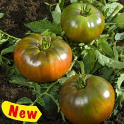 Nero di Crimea tomato