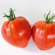Ox-heart tomato