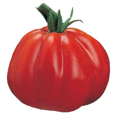 Albenga Ox-heart tomato