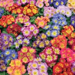 Bicolor mix
