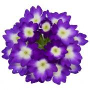 Violetto blu