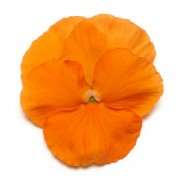 arancio intenso