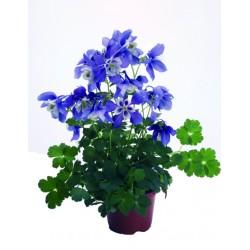 Bianca e blu
