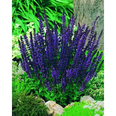 Blu violetto