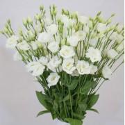 Bianco puro 3