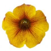 caramel yellow