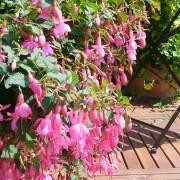 Beacon Pink