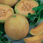 Grafted Cantaloupe