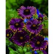 Summer flowering